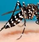 Registra Veracruz mil 719 casos de dengue y un sólo deceso por esa enfermedad en la entidad