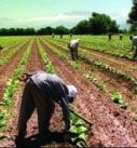 Provoca aumento en la importación de granos las políticas agropecuarias de la 4T aplicadas a la reforestación