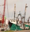 Regresan a la pesca barcos camaroneros que habían parado labores por el alto precio del combustible